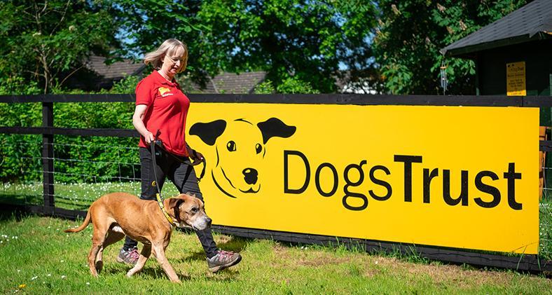 Dogs Trust West Calder